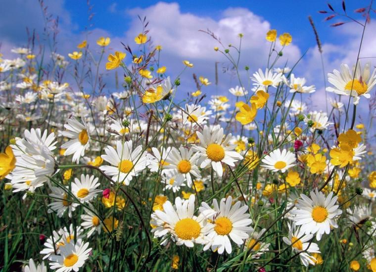 """Большая коллекция  """"цветочных """" обоев для создания чудесного, весенне-летнего настроения..."""